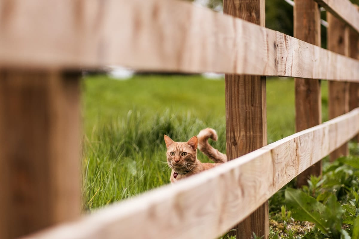 cat in a field with a wooden gate irish cat names