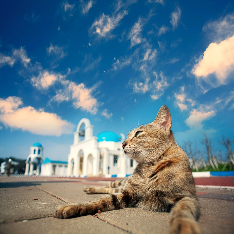 cat in foregound with greek church in background