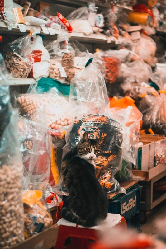 cat inside a food store