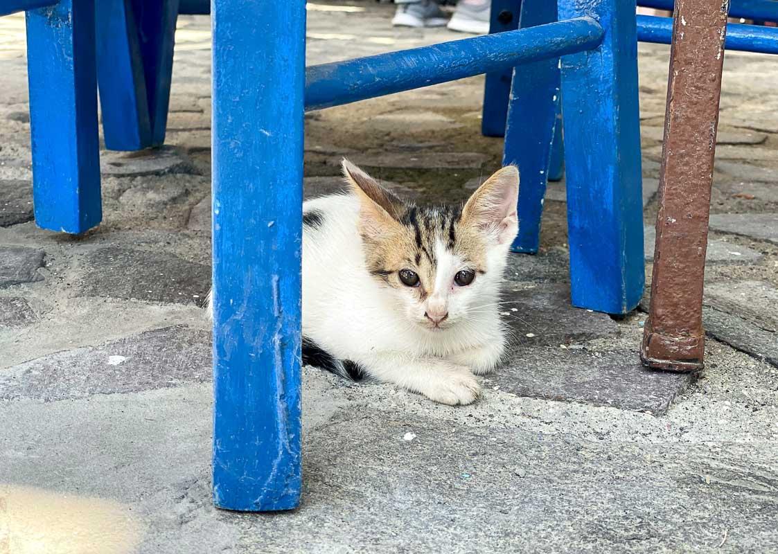 cat on ground under blue chair
