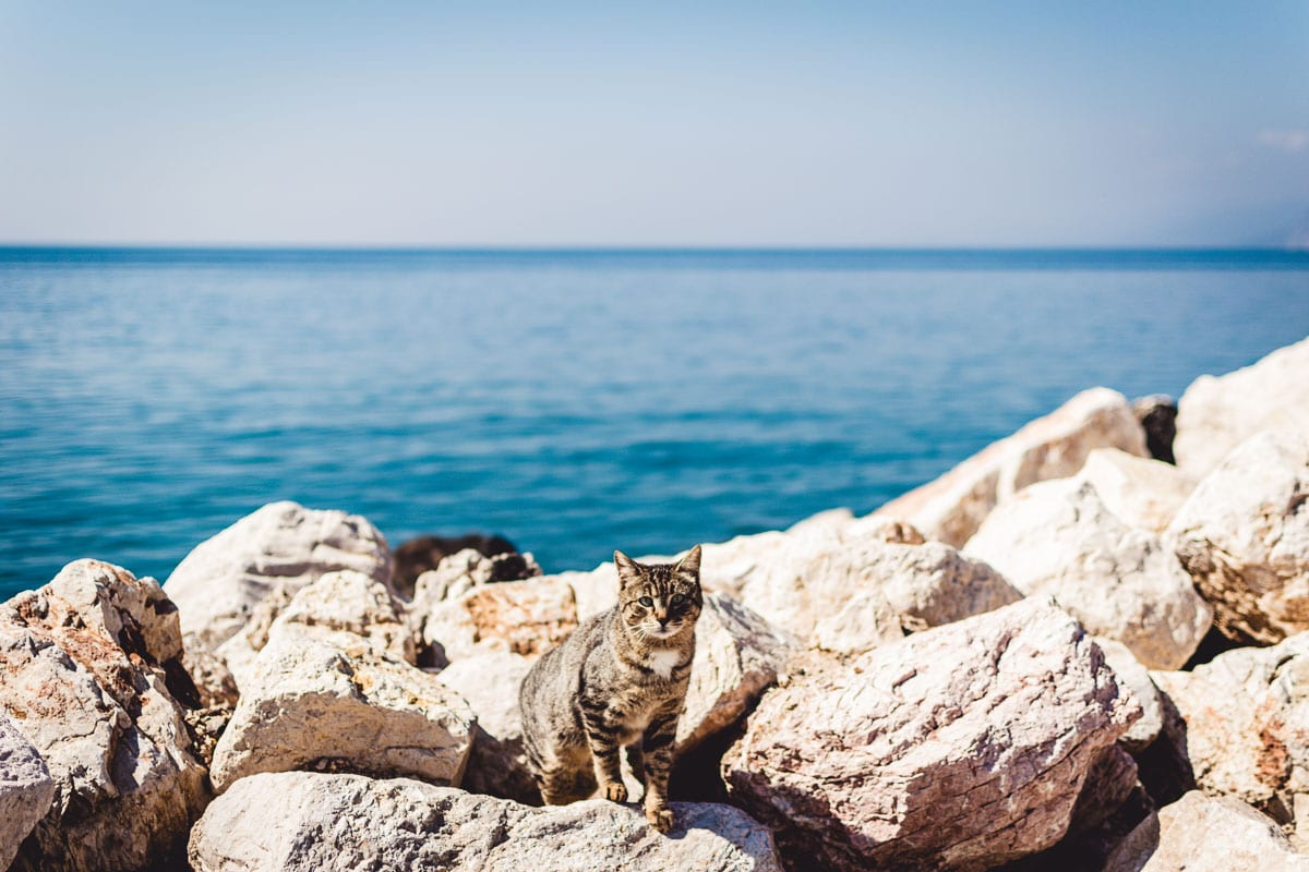 cat on rocks with sea behind