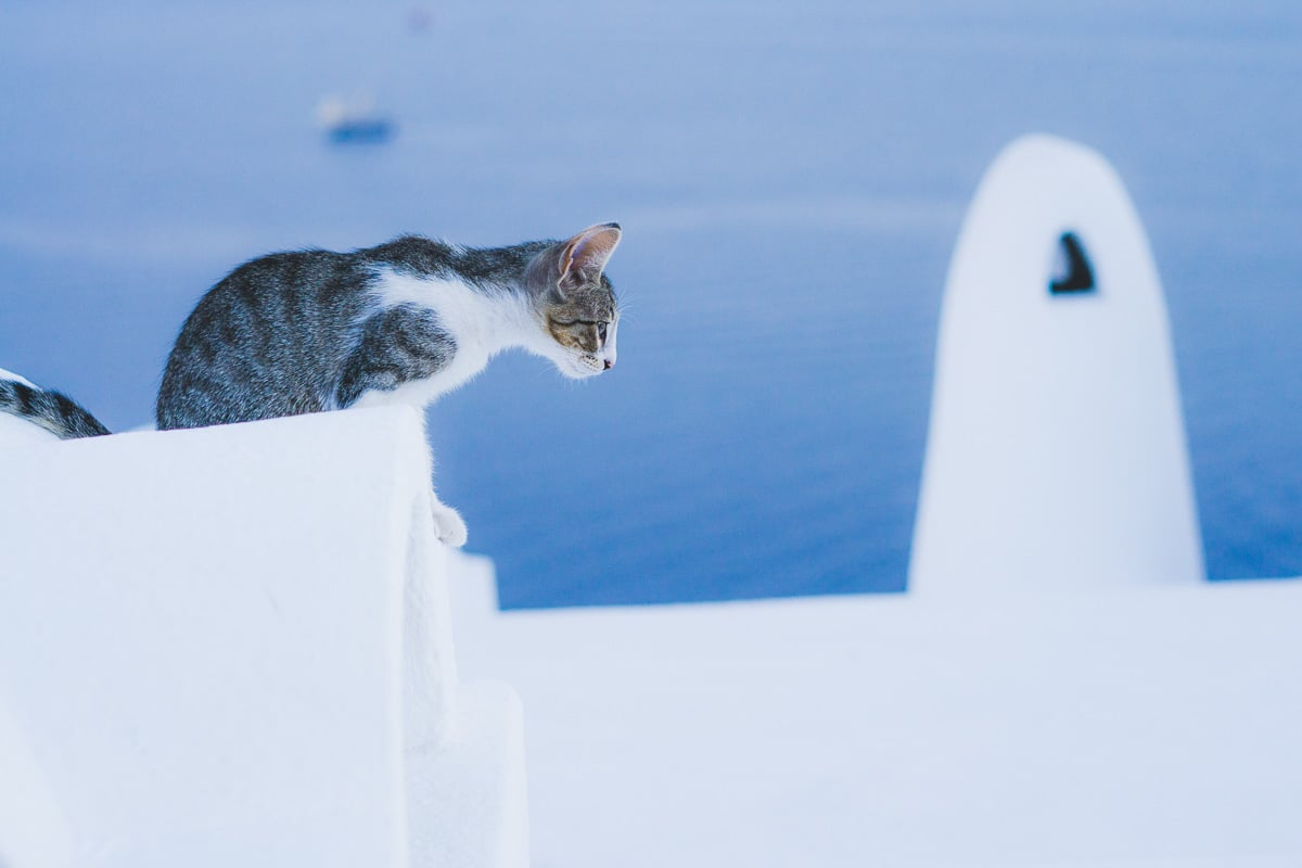 cat on top of white church