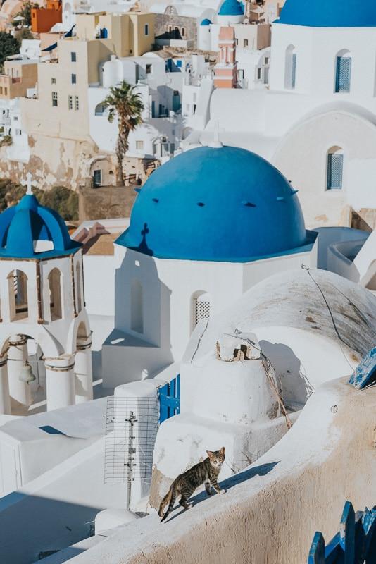 cat with greek island buildings behind him