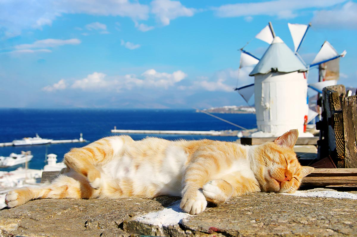 ginger cat lying down on greek island with windmill in backgroun