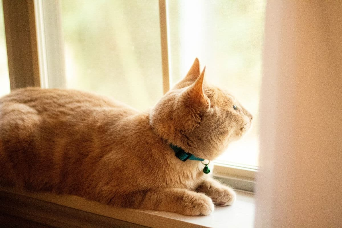 ginger cat-on-window-sill.