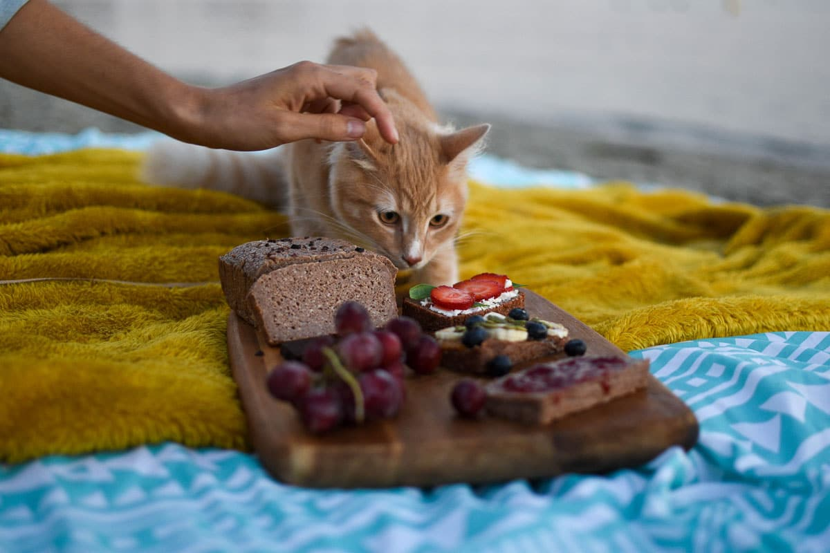 ginger cat with cheese and grape board in front of it
