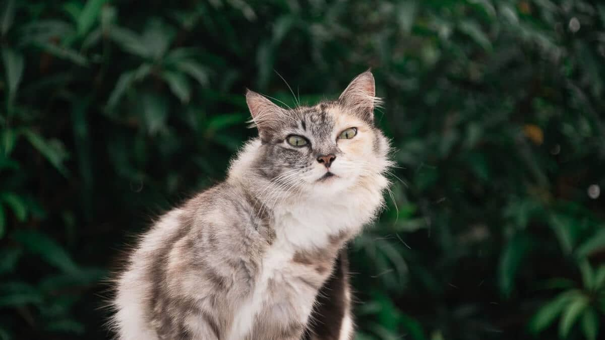 grey and white cat with green trees in background