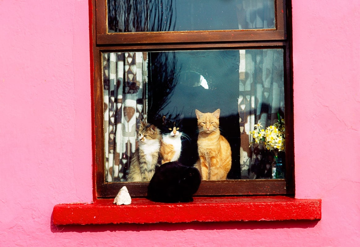 several cats in a window sill of a pink hat with a red frame