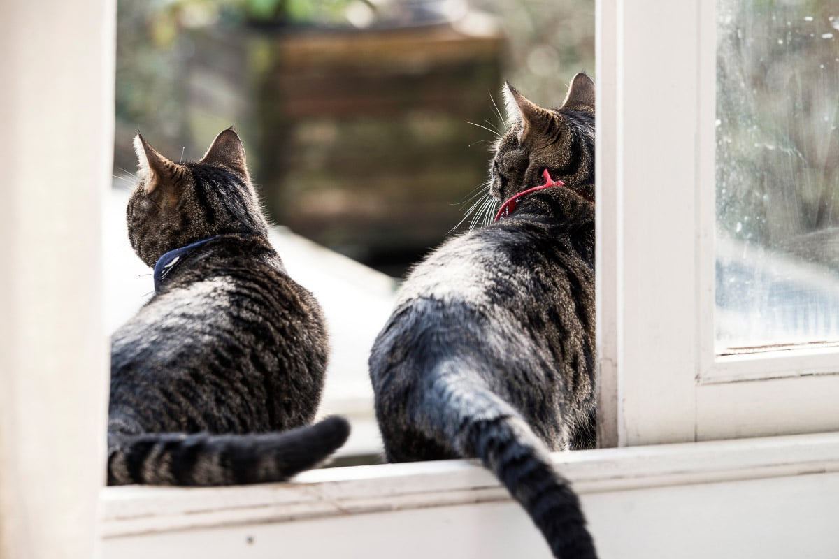 Two tabby cats sit in a window sill seen from behind