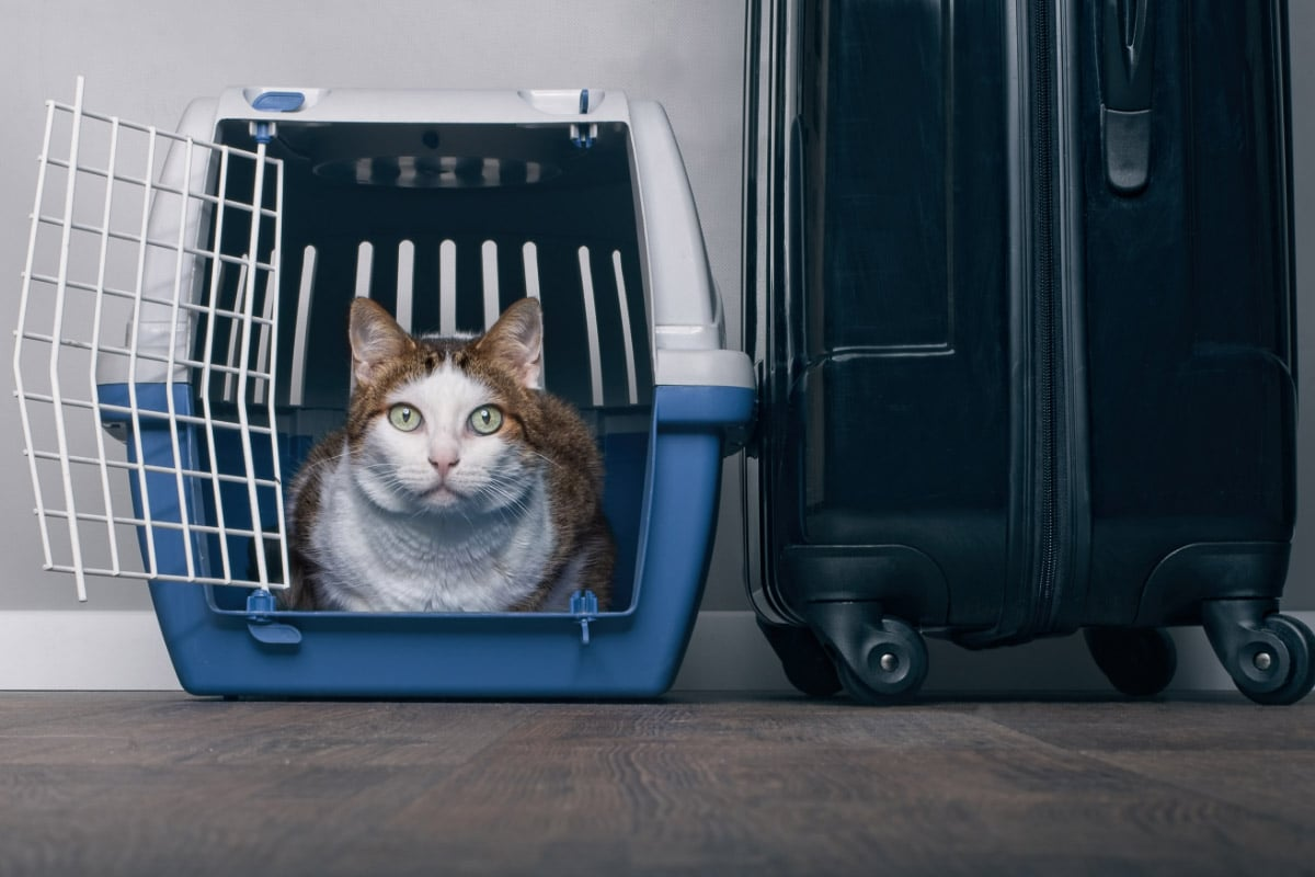 cat in carrier with suitcase next to it
