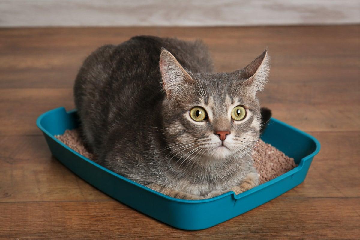 cat in small green litter box