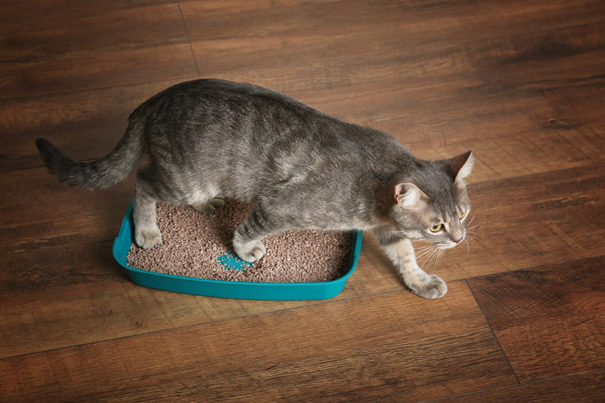 cat on green litter box and wooden floor
