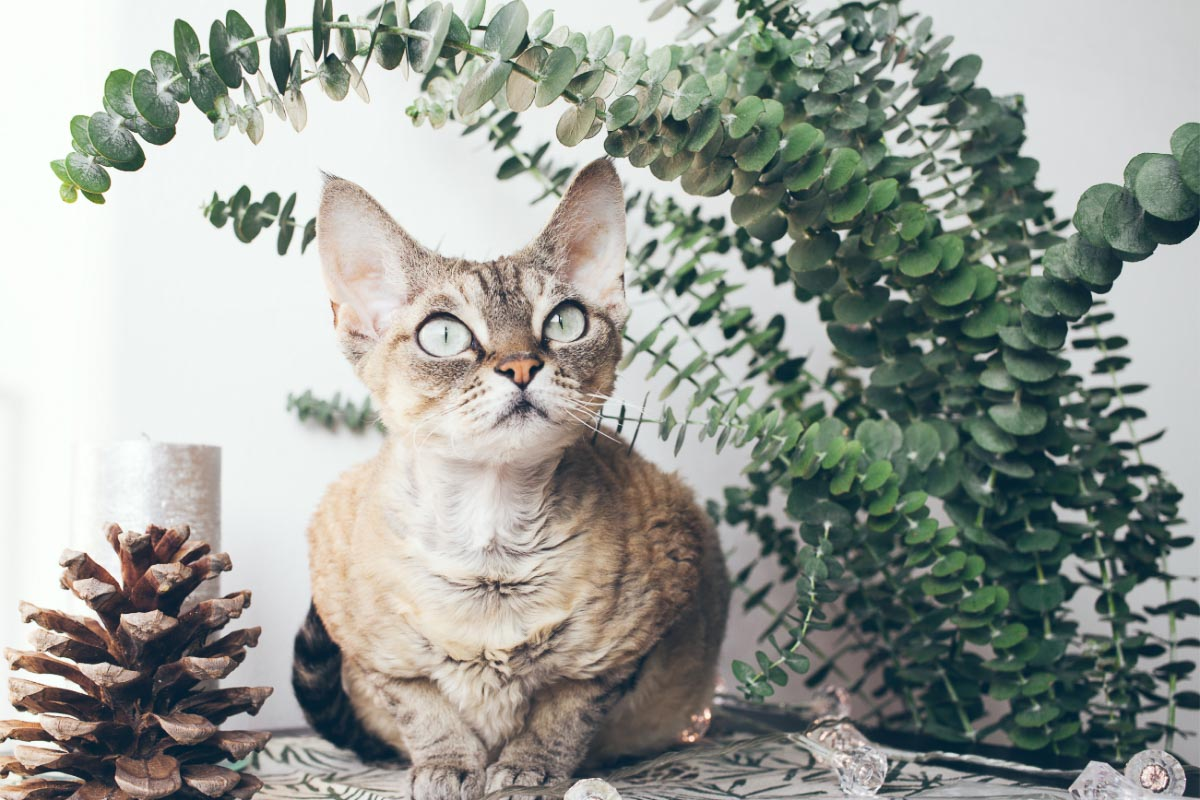 Devon rex cat under plant looking up