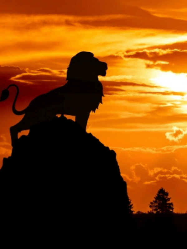 male lion silhouetted against orange sky