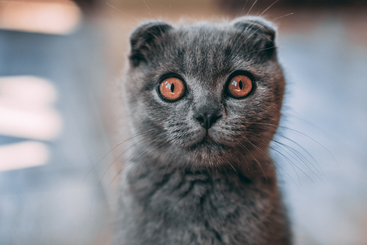 What Does It Mean When A Cat Stares At You? 5 Reasons Why