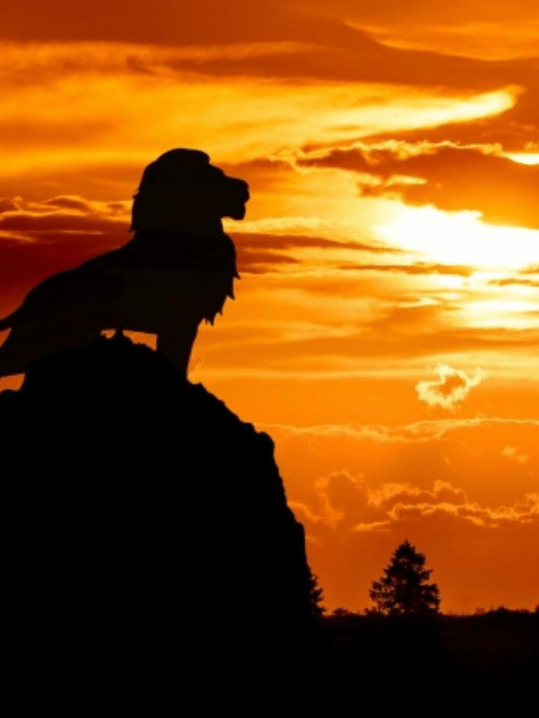 lion silhouette against sun set