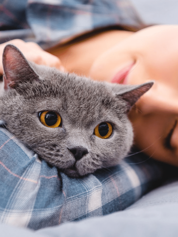 grey cat snuggled up against woman
