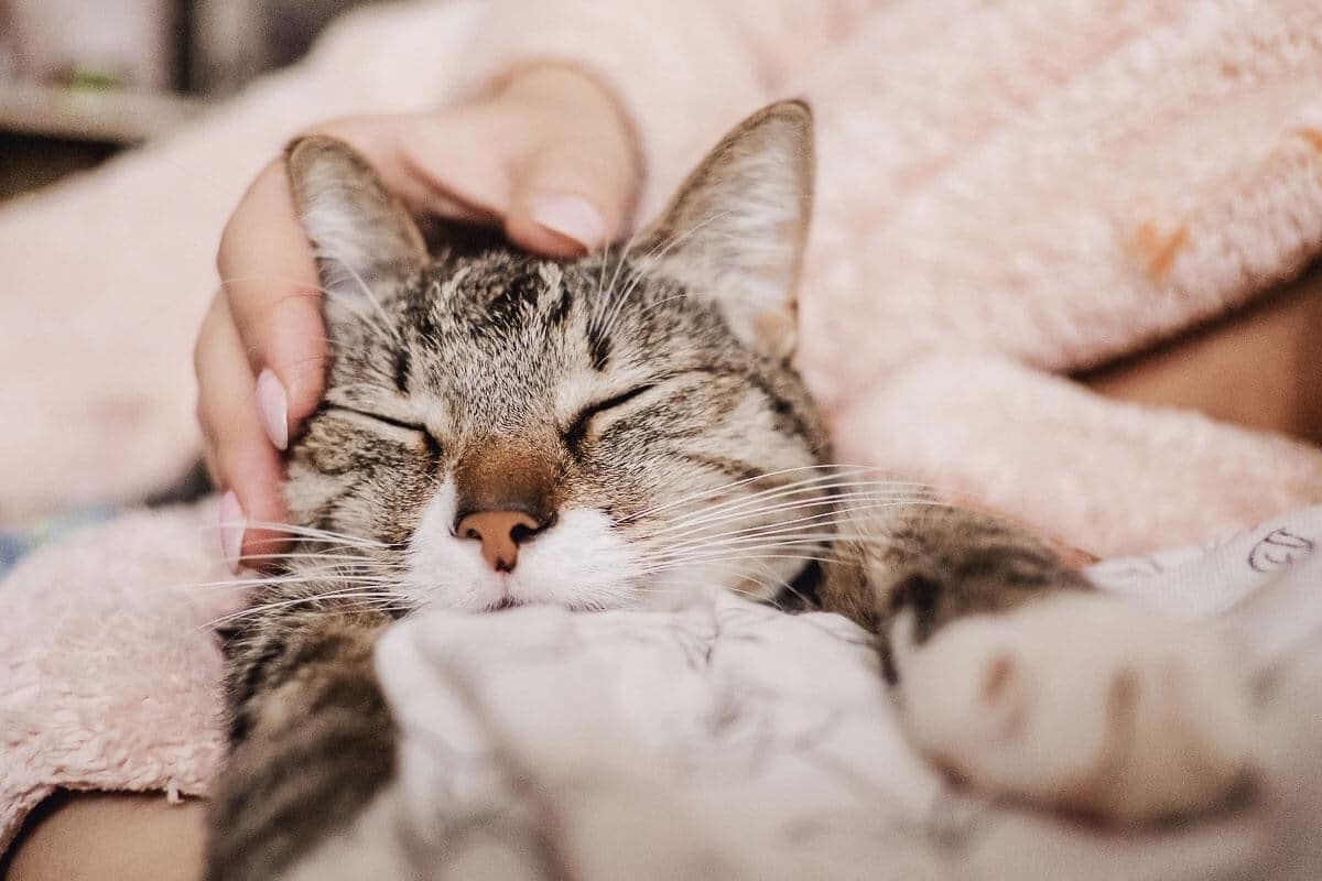 Why Do Cats Purr When You Stroke Them? A Purr-fect Mystery