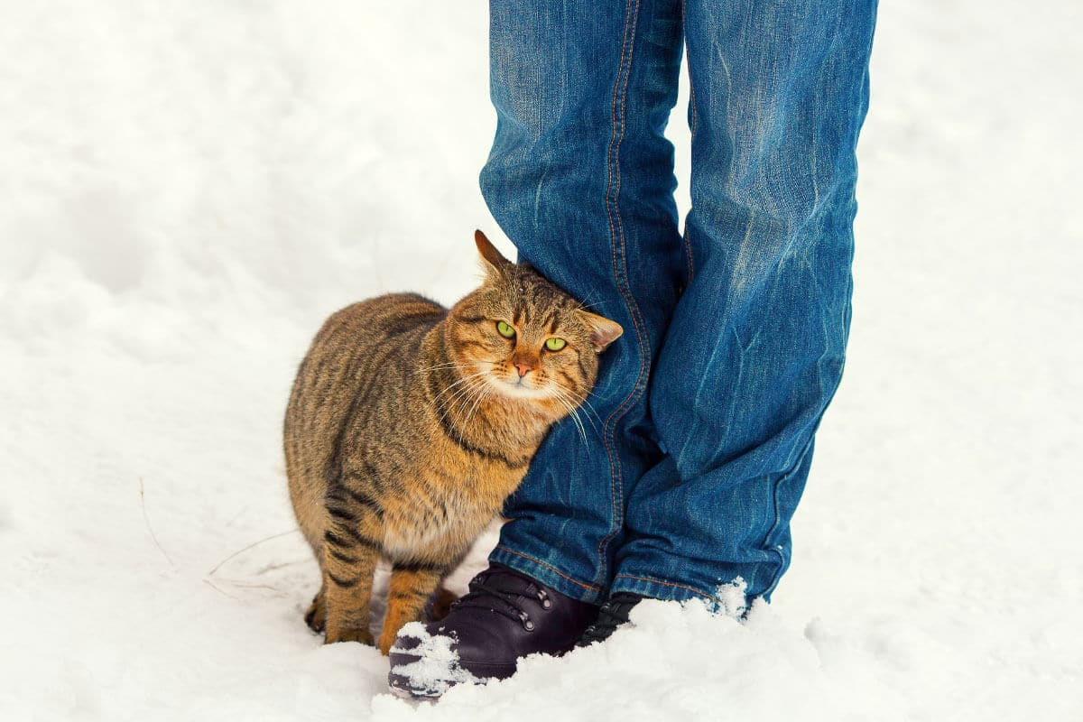 What Does it Mean When a Cat Rubs Up Against You? + more cat behaviours