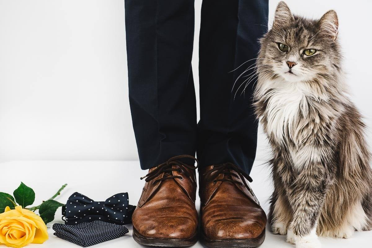 grey cat against legs of man in brown shoes