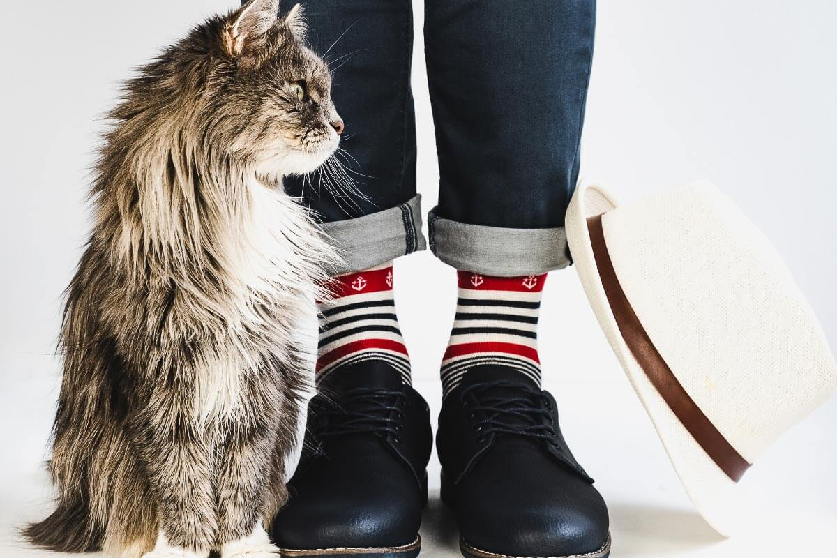 grey cat against legs wearing jeans and stripey socks