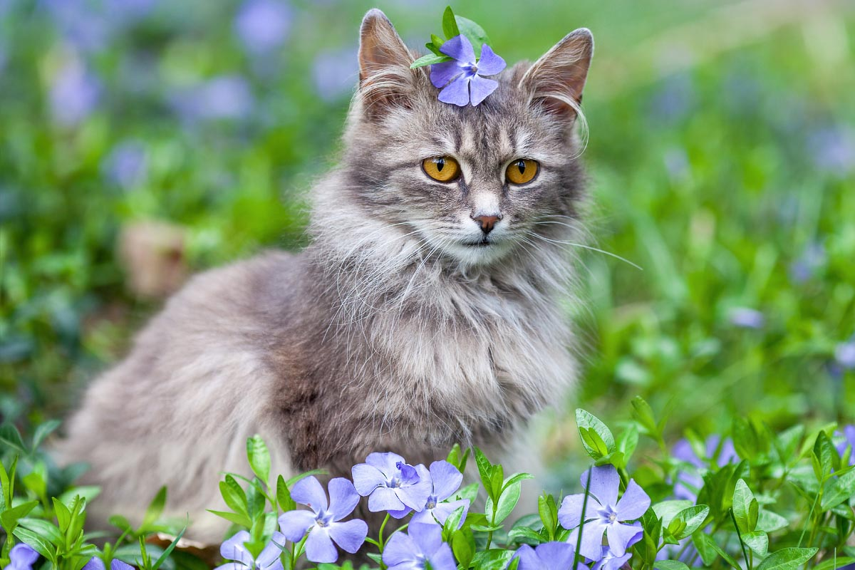 9 Gorgeous Grey Cat Breeds