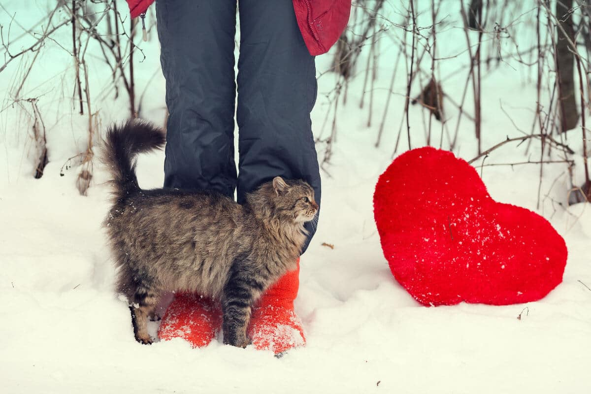 tabby cat against person's legs in the snow with