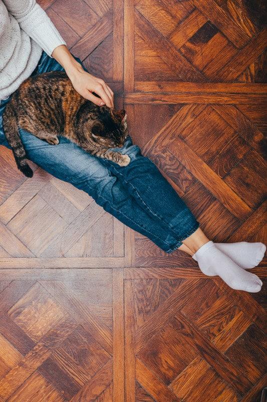 tabby cat on woman's legs in jeans on wooden floor