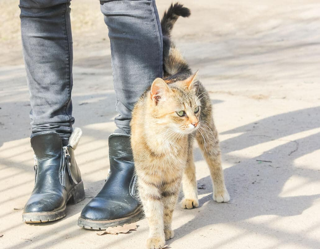 Hungry cat rubs against the legs of a passerby. Street cat at hi