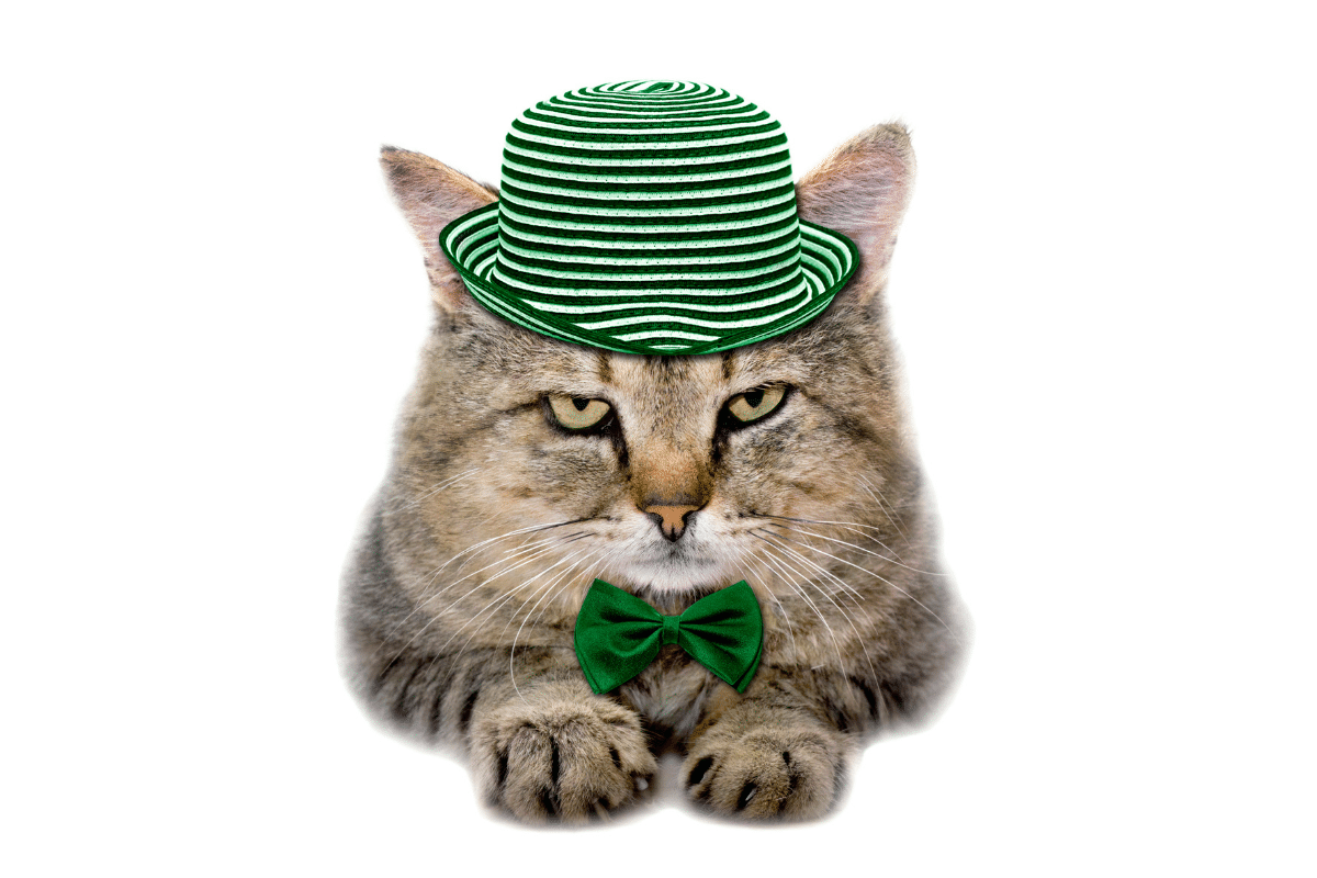tabby cat wearing green hat and bowtie irish cat