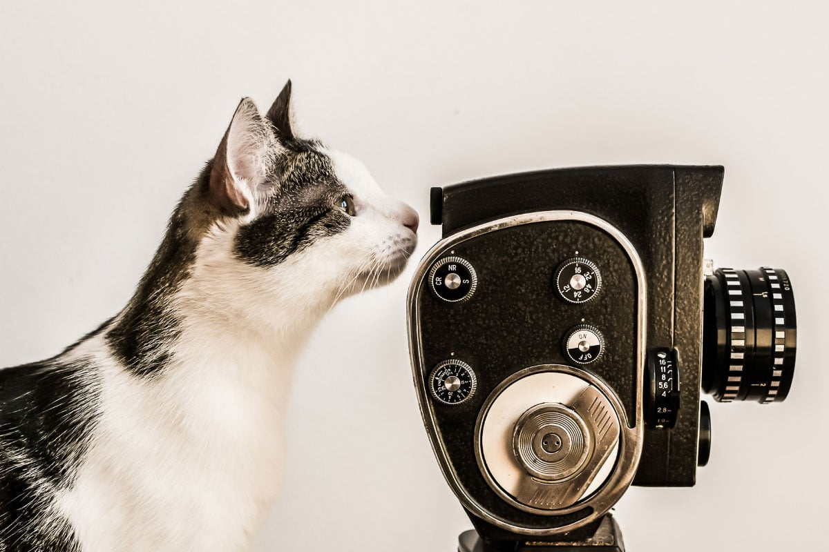 black and white cat with movie camera