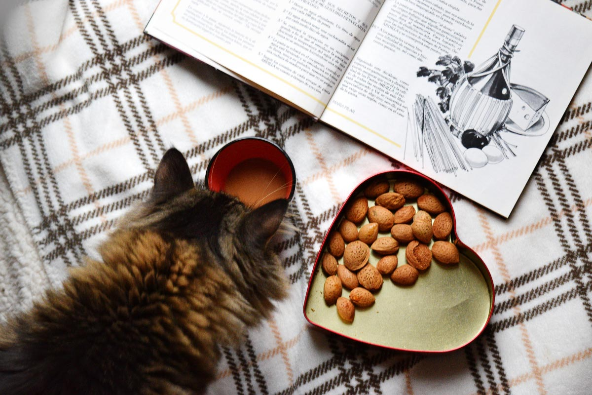 black cat looking at magazine with nuts to the side