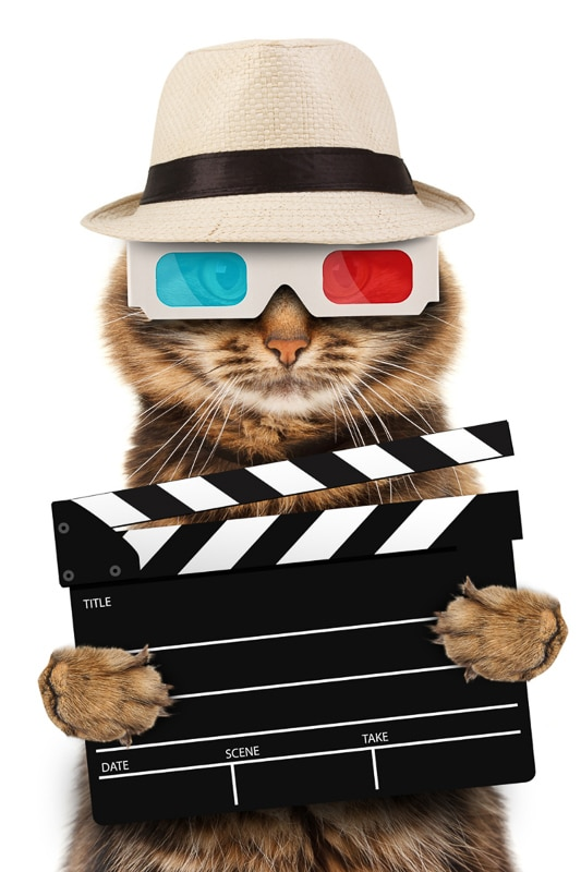 cat wearing hat and 3D glasses with movie board