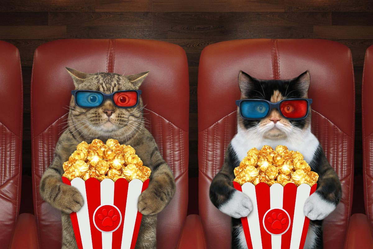 cats with 3d glasses and popcorn in a cinema