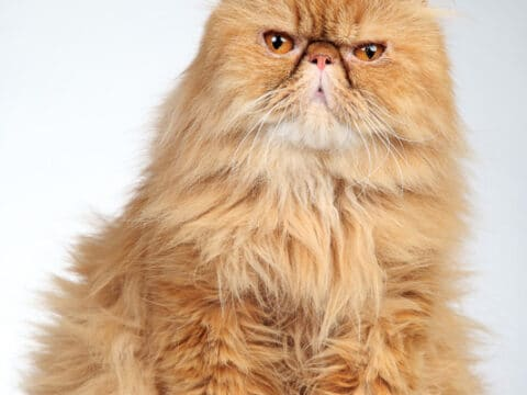 11 Ginger Cat Names for your Tiger