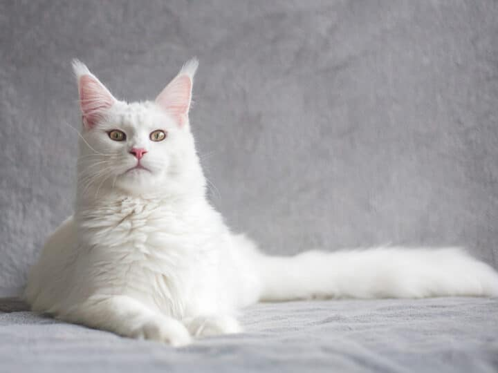 white cat with pointy ears and green eyes white cat names