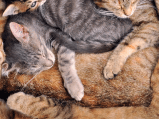 Multiple cats sleeping in a basket
