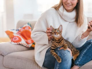 bengal tabby on owners leg