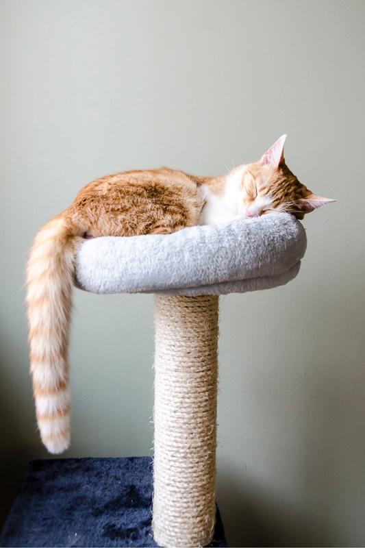 ginger kitten asleep on cat tower