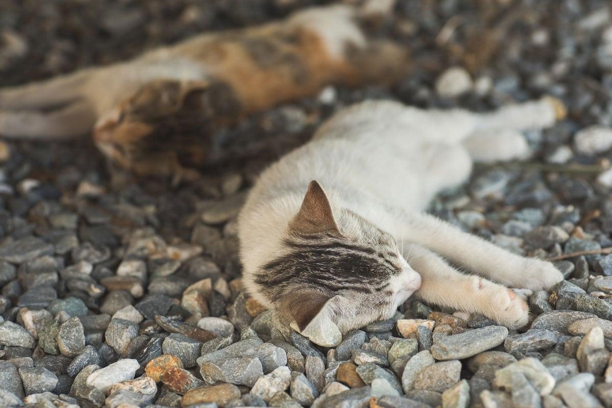 kittens asleep on stones