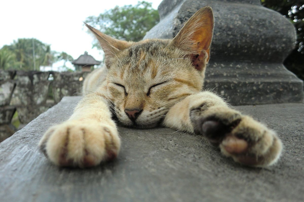 tabby cat asleep with paws outstretched