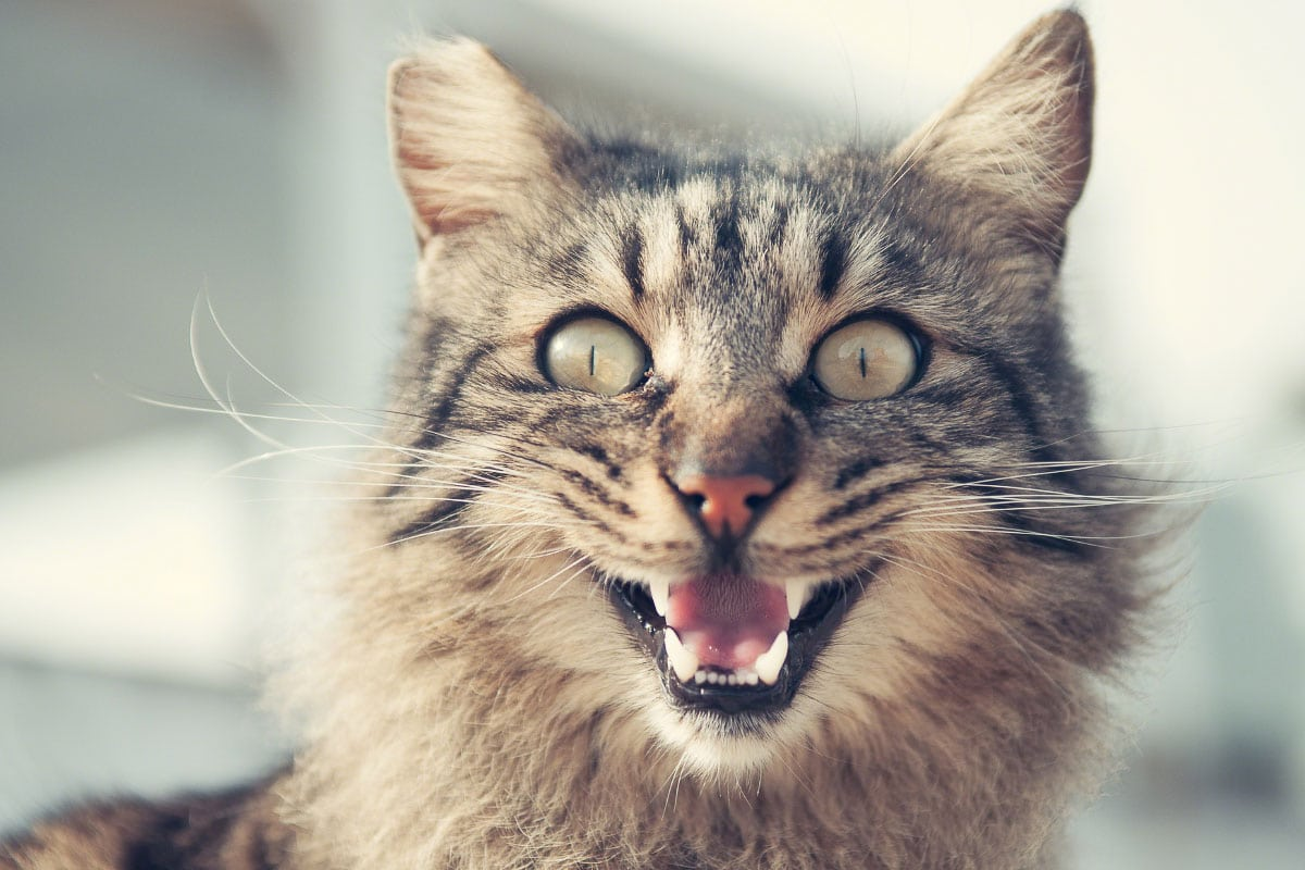 9 Reasons Why Cats Drool and other cat behaviour explained
