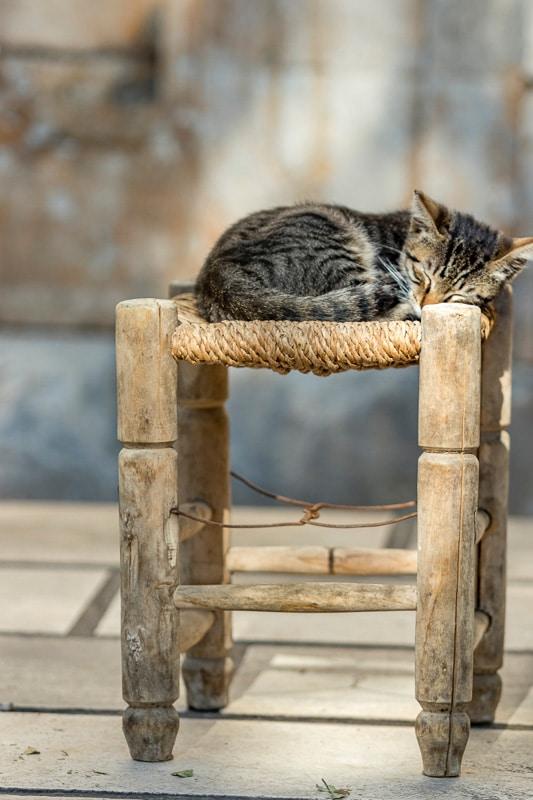 tabby kitten asleep on a stool