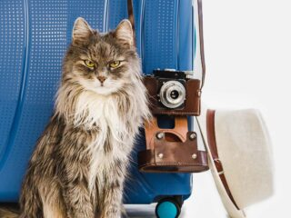 tabby stylish and travelling