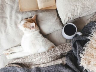 white cat asleep in human bed with coffee