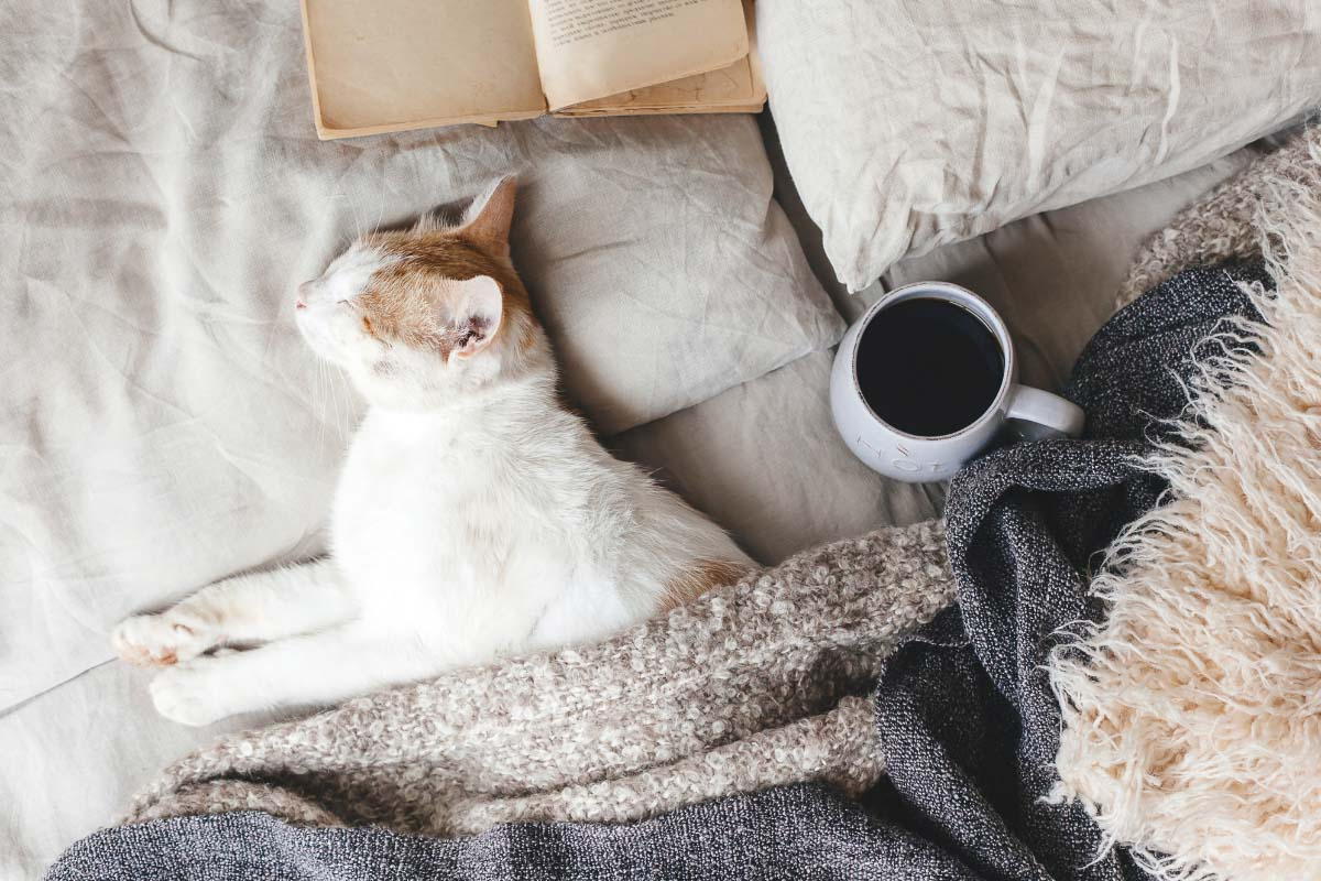 Do Cats Dream? What Cat Owners Need to Know