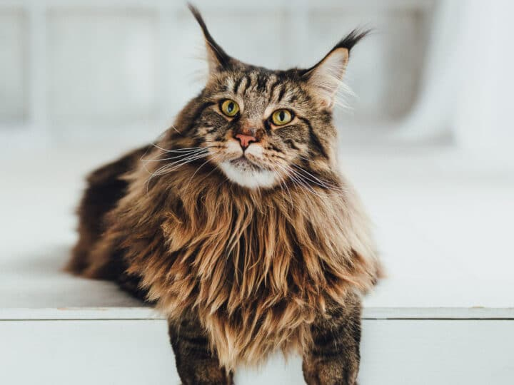 13 Best Male Cat Names You'll Love