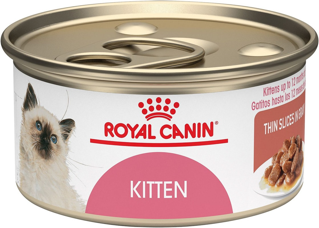 royal canin best kitten wet food