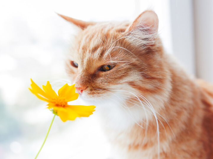 What Smells do Cats Hate: 13 You Must Avoid
