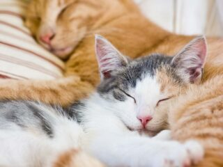 two cats asleep